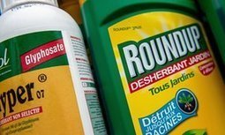 European commission plans to relicense 'carcinogenic' weedkiller | Politiques environnementales | Scoop.it