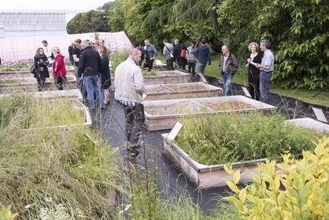 A Lausanne, la nature revient par les toits | Dans l'actu | Doc' ESTP | Scoop.it