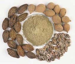 Triphala Churna Benefits and Dosage   Herbs   Scoop.it