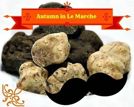 Autumn in Le Marche for a Truffle Break | Le Marche another Italy | Scoop.it
