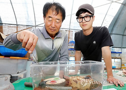 Korea's insect industry grows sharply over 4 years | Entomophagy: Edible Insects and the Future of Food | Scoop.it