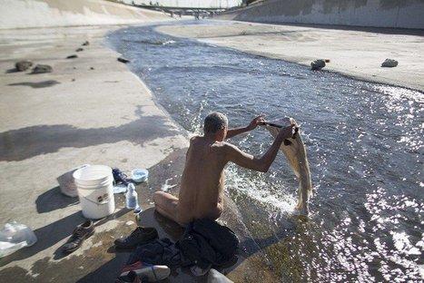 La vida de personas sin hogar que habitan en las orillas del río Los Ángeles (FOTOS) | Activismo en la RED | Scoop.it
