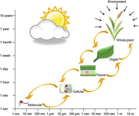 Five fabulous photobiology reviews from The Plant Cell | plant cell genetics | Scoop.it