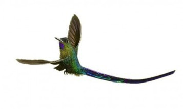 Does Google's Hummingbird Have A Long Tail? | Social Business | Scoop.it