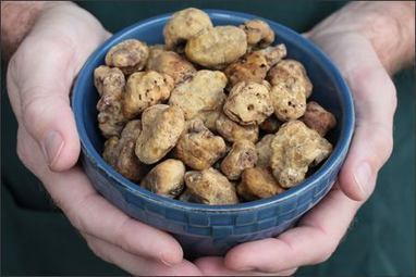 Acqualagna: Magical land of the truffle | Le Marche and Food | Scoop.it