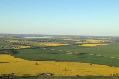 Authorities audit South Australian canola farmers  amid reports of chemical misuse   Beet western yellows virus   Scoop.it