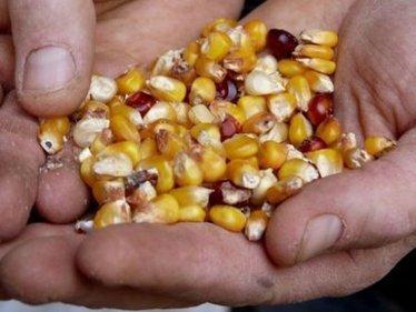 Semences paysannes: un avenir sans pesticide et sans OGM est possible | Questions de développement ... | Scoop.it