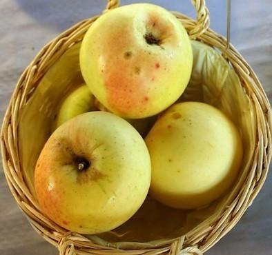 Une pomme de 1950équivaut à 100pommes d'aujourd'hui | TICE & FLE | Scoop.it