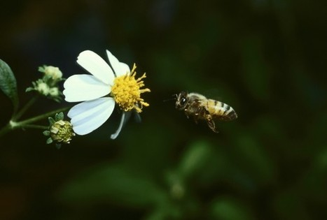 Honeybees Vital To The Agricultural Industry | redOrbit | CALS in the News | Scoop.it