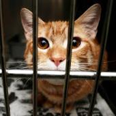 Bunny's Blog: Steve Dale Addresses Feline Overpopulation | Pet News | Scoop.it