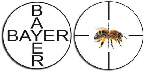 Bayer lance Beenow, son magazine sur l'abeille - Enviscope | Abeilles, intoxications et informations | Scoop.it