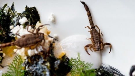 Entomophagy, a pint of science and the men who want you to eat bugs | Entomophagy: Edible Insects and the Future of Food | Scoop.it