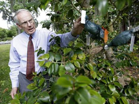 Doctor leads effort to bring memorial garden back to life - Gainesville Sun | Sustainable Living | Scoop.it