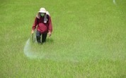 Massive Pesticide Exposure Inflating Global Obesity Crisis | pollu-pesticide | Scoop.it