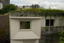 Biodiversité en milieu urbain dense, un atout pour le bien-être des citadins - Biodiv'ille   Urbanisme   Scoop.it