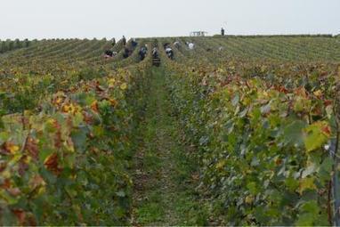 Nouveau record de vente d'un hectare de vigne à 1,8million d'euros en Champagne   Le vin quotidien   Scoop.it