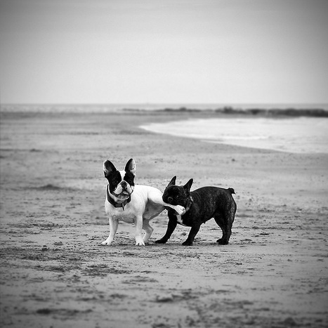 Photography: Dogs - Design.inc Blog   Xposed   Scoop.it