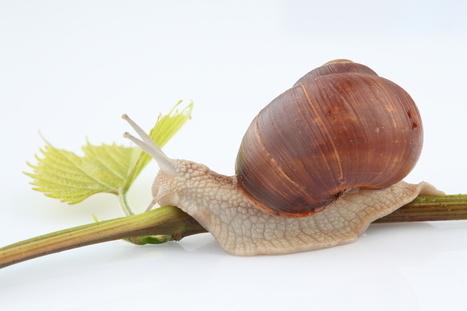 Tout savoir sur le cocon sémantique - Consultante seo ! | Curation par www.referencement-la-rochelle.fr | Scoop.it