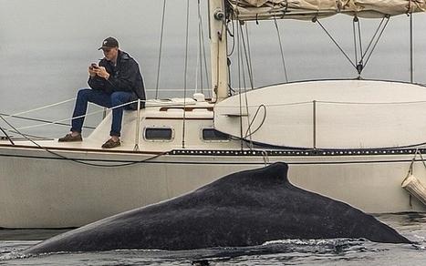 Collé à son portable, il rate une baleine rare.   Idées Destinations   Scoop.it