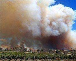 In Tasmania, Smoke clears grape crops   Vitabella Wine Daily Gossip   Scoop.it