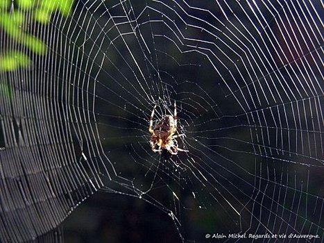 Insectes d'été en Auvergne. | Revue de Web par ClC | Scoop.it