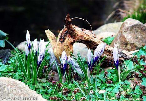 Frühlingsblumen | kostenlose-Bilder | Scoop.it