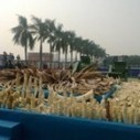 China Crushes 6 Tons of Ivory – But Is It Enough? | Green Action ... | Ethical issues when trading with Emerging Markets | Scoop.it
