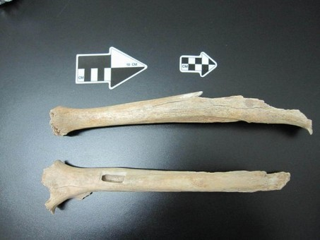 40,000-year-old human leg shows how prehistoric Asians related to Native Americans | Anthropology, Archaeology, and History | Scoop.it