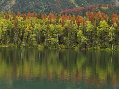 How pine beetles can predict the future of climate change - GreenBiz.com (blog) | Bayesian Statistical Modelling | Scoop.it