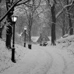 Snowstorm Devastated Central Park Trees | Weather And Disasters | Scoop.it