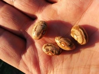 En troquant des graines sur le net, ils défient l'industrie des semences | Nouveaux paradigmes | Scoop.it
