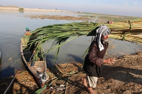 Iraq's environment, water supply in severe decline - report | Sustain Our Earth | Scoop.it