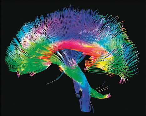 From the connectome to brain function : Nature Methods : Nature Publishing Group | Biosciencia News | Scoop.it