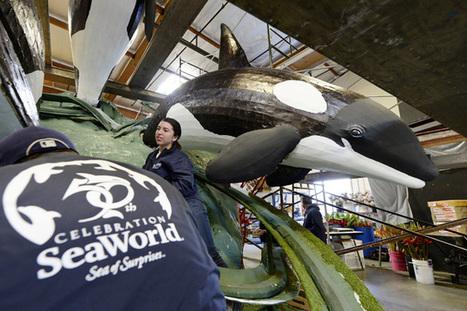 SeaWorld's Very Rotten Year | Social Media Slant 4 Good | Scoop.it