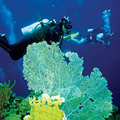 Holidays to South & Central America and beyond - Belize has some of the Best Diving Spots | Africa, North and South America | Scoop.it