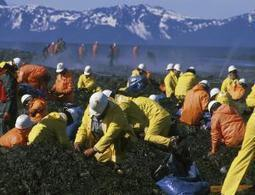 Is Exxon Valdez oil still a threat 25 years on? - opinion - 20 March 2014 - New Scientist   Oil Spill   Scoop.it