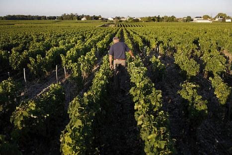 La viticulture française engage sa révolution | Univers du vin | Scoop.it