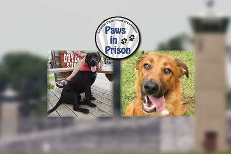 Inmates offer training to homeless dogs and learn new skills in the process - TXK Today | Prisoner learning | Scoop.it