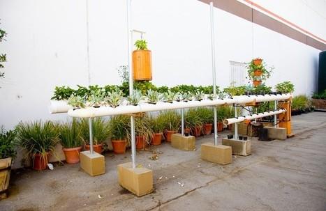 Farm Love | Blog | Vertical Farm - Food Factory | Scoop.it