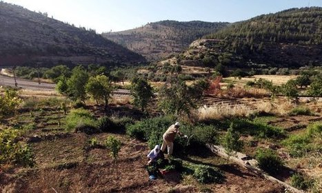Palestinian Village Tries to Protect Landmark | Geography In the News | Scoop.it