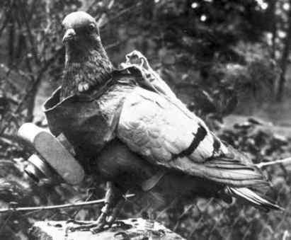 Des pigeons photographes pour la photographie aérienne en 1907 | Photographier le monde | Scoop.it