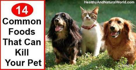 14 Common Foods that Can Kill Your Pet | Heal the world | Scoop.it