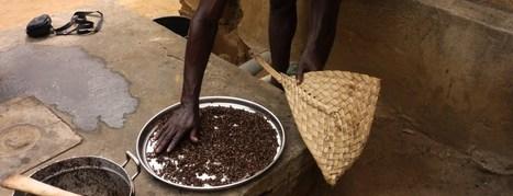 Entomophagie : La cuisine d'Aminou   Entomophagy: Edible Insects and the Future of Food   Scoop.it