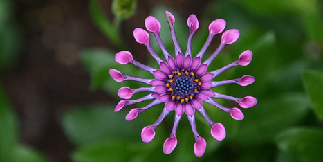 PlantNet, l'application mobile qui vous aide à reconnaitre les plantes par l'image | Eco & Bio | Scoop.it