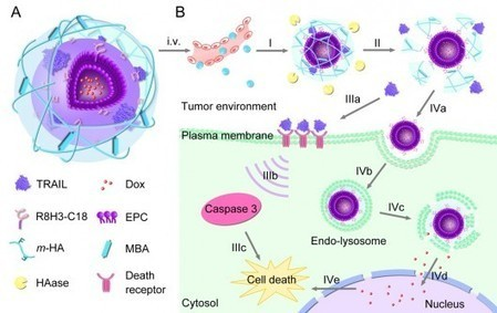 Two-in-one nanoparticles exploit tumor cells to precisely deliver multiple drugs | Longevity science | Scoop.it