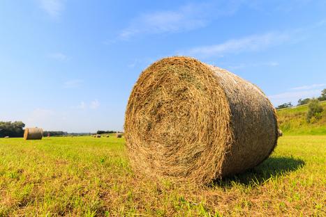 Les défis de l'agriculture allemande | Questions de développement ... | Scoop.it