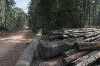 Reduced-impact logging supports diversity of forests almost as well as leaving them alone   Sustain Our Earth   Scoop.it