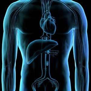 Bring Human Anatomy to Life Using PowerPoint | BioGirl | Scoop.it
