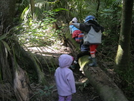 Little Eyes on Nature: Ko te Ngahere - Our Forest Programme | Early Years Education | Scoop.it