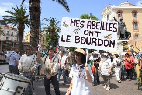 Perpignan: manifestation d'apiculteurs contre l'hécatombe des abeilles - Libération | Abeilles, intoxications et informations | Scoop.it